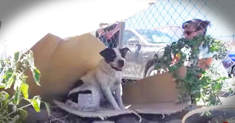 Good Samaritans Help Rescue Kind Fearful Dog