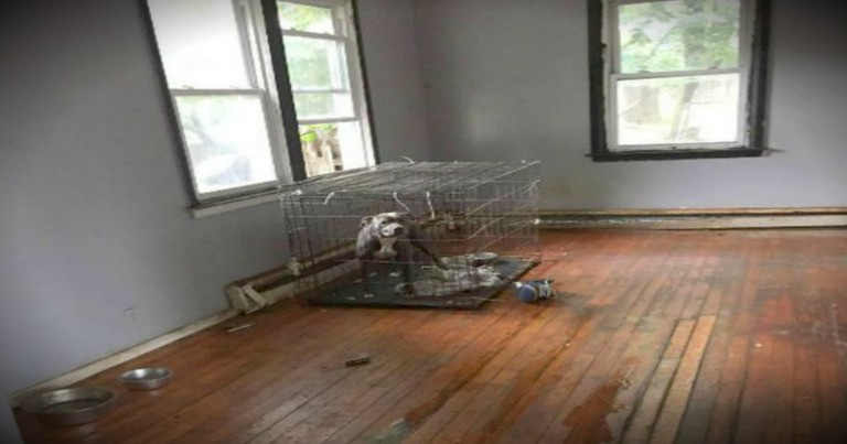 What Was Left Behind In An Abandoned House Is Heartbreaking!