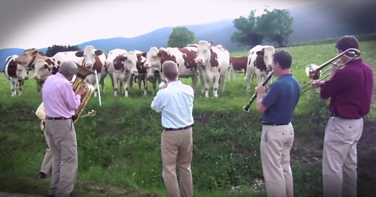 Cows Love Jazz Band's Impromptu Performance