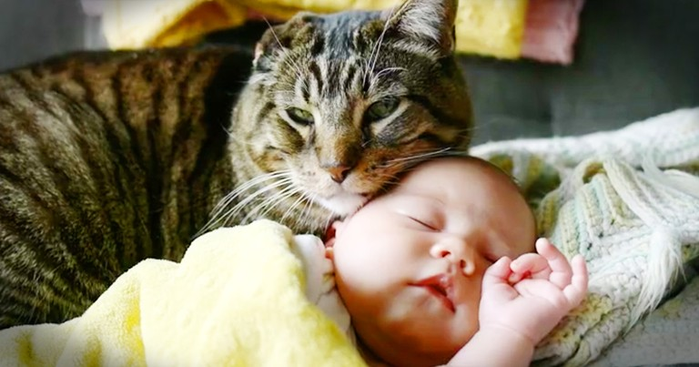 Rescue Kitty Snuggling The New Baby Is Too Sweet