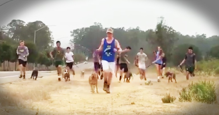 Cross Country Team Takes Shelter Dogs On Run And Steal Our Hearts