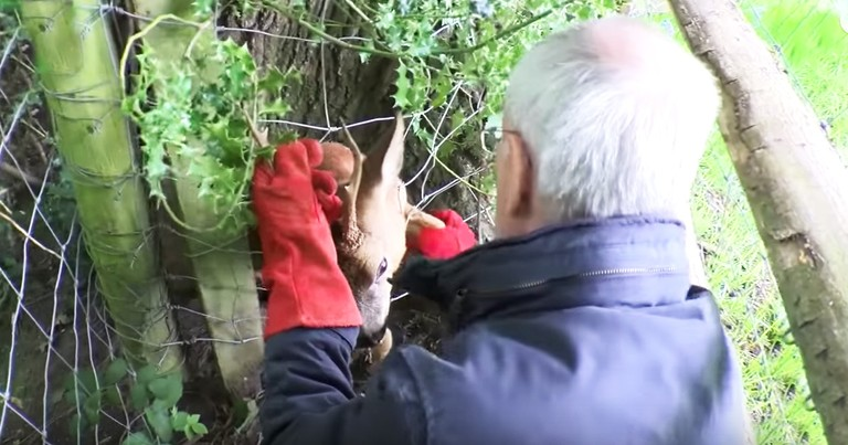 Feisty Deer Makes Rescuers Take A Tumble