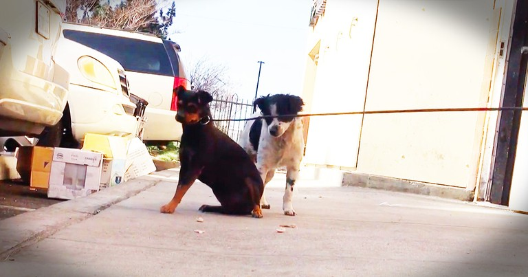 Dogs Left Behind After Their Owner Passed Get Dramatic Rescue