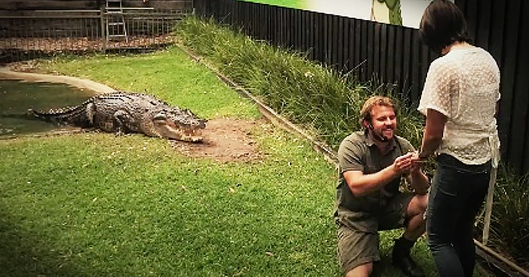 Reptile Wrangler Proposes With Help Of Crocodile
