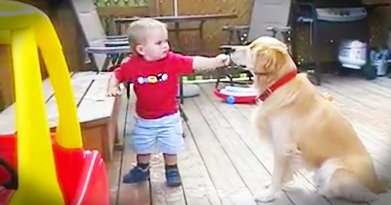 Baby Boy Helps Give A Blind Dog A Snack