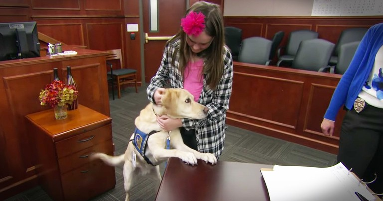 Service Dog Helps Traumatized Kids Face Their Fears In Court