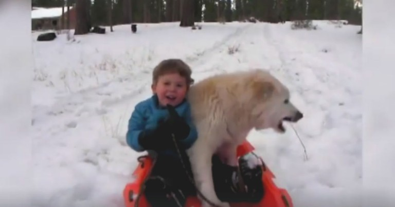 These Crazy Dogs Are Loving Their Snow Adventures