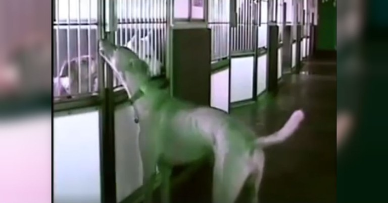 Mystery At The Dog Shelter - Who Is Letting The Dogs Out At Night?
