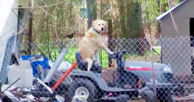 Live Tornado Broadcast Interrupted By A Dog On A Lawn Mower