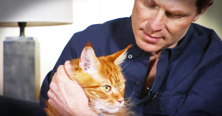Famous Chef's Love Of Cats Is Too Sweet