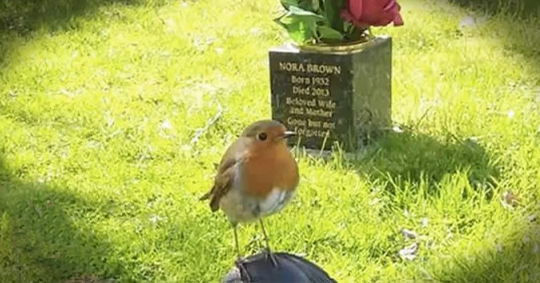 Mother Sees Beautiful Sign While Visiting Grave Of Her Deceased Son