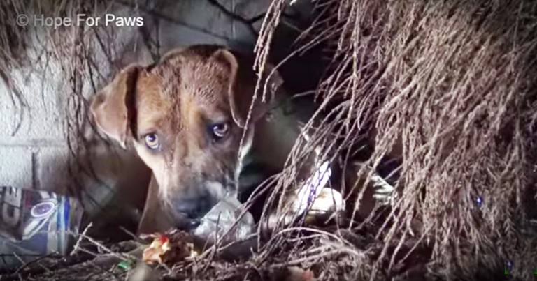 New Momma Dog's Rescue With Her Puppies In The Pouring Rain Is Heartbreaking