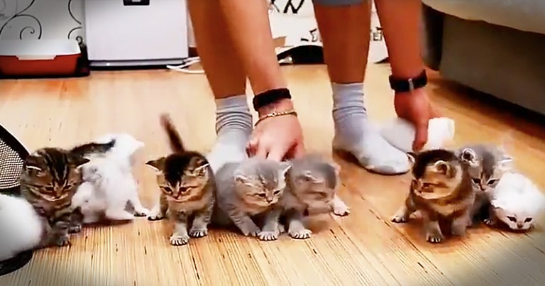 Cute Kittens Just Can't Sit Still For A Family Photo