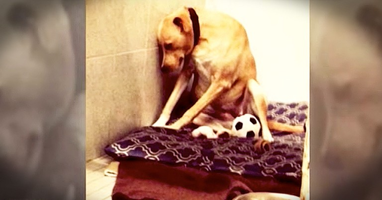 Sad Dog Gets Forever Home After Being Returned Twice