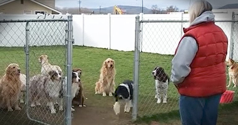 Smart Dogs Wait For Their Names To Be Called