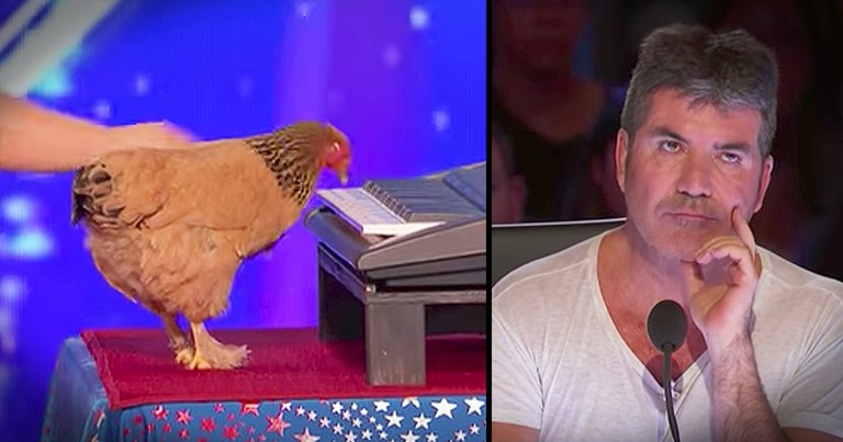 Piano-Playing Chicken Earns A Standing Ovation