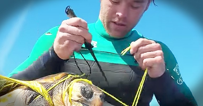 Man Saves Sea Turtle Tangled In A Plastic Balloon