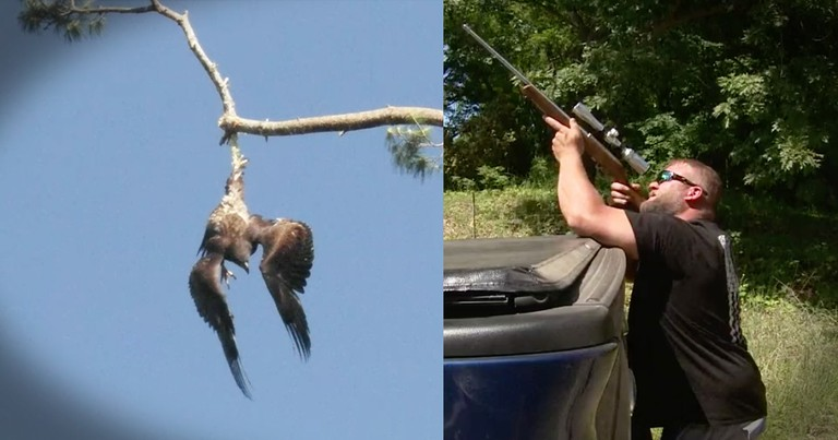 Veteran Sniper Steps In To Save A Trapped Bald Eagle