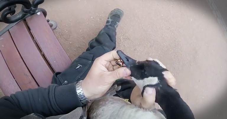 He Was Feeding This Goose And All Of A Sudden Snatched Him In This Dramatic Rescue
