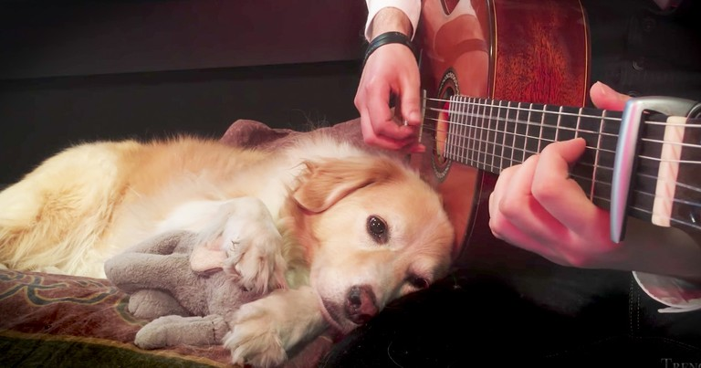 Sweet Sleepy Dog Is Lulled By Her Owner's Guitar Skills