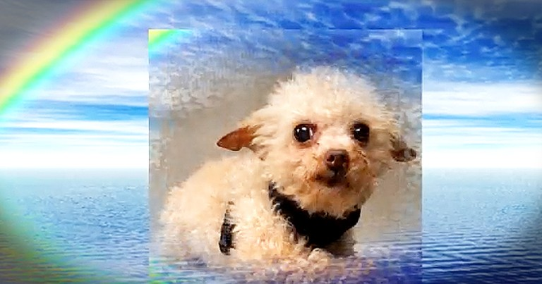 Beautiful Poem Tells The Story Of The 'Rainbow Bridge'