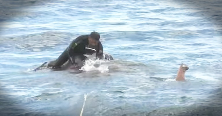 Navy Team Rescues Elephant From Drowning