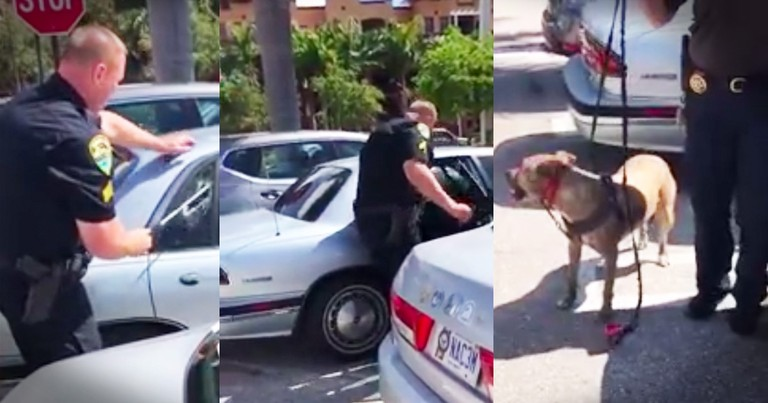 Watch As This Heroic Officer Saves A Dog From A Hot Car