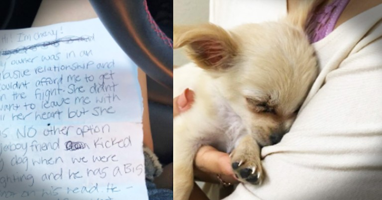 Abandoned Puppy In A Bathroom Sheds Light On Domestic Violence