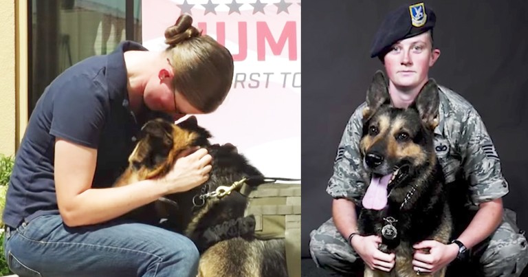 Retired Military Dog Embraces Handler During Heartfelt Reunion