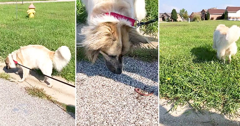 Adorable Dog Tries To Rescue Worms
