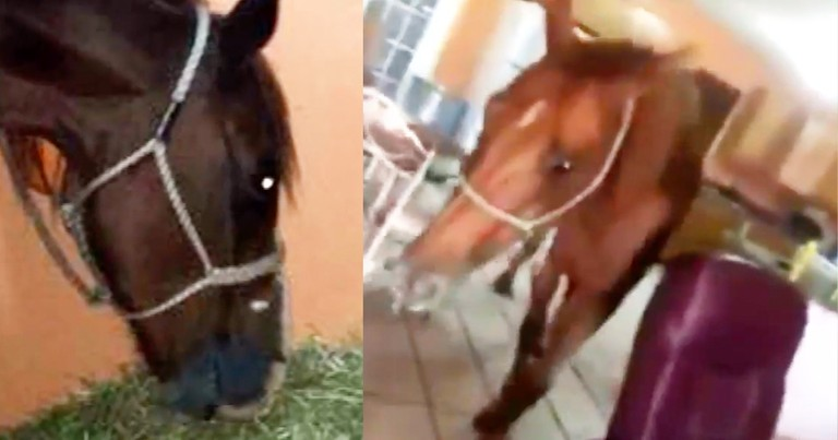 Roommates Transform Home Into Makeshift Horse Shelter During Irma