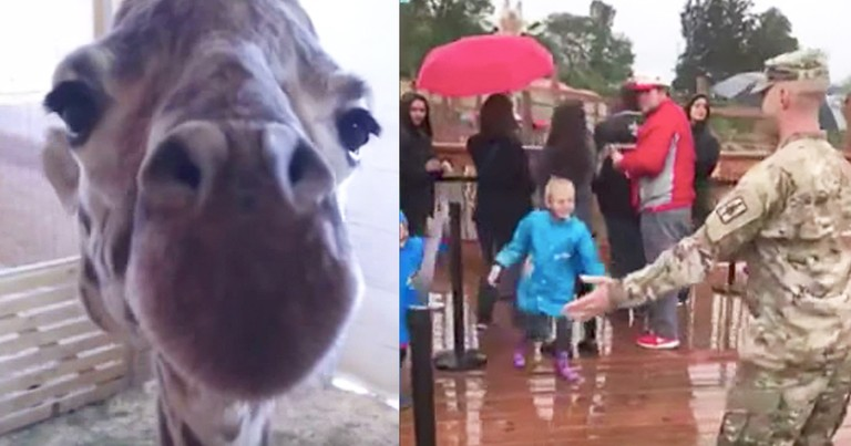 April The Giraffe Helps Soldier With Surprise Homecoming Reunion