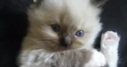 Absolutely Adorable Kitten Will Melt Your Heart