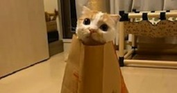 Shy Cat Makes a Great Happy Meal Toy