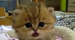 Cute Kitten in a Basket Will Make Your Heart Explode