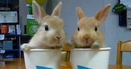Twin Rabbits in a Cup are So Adorable