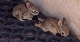 Paraplegic Bunny Gets Some Help From a Small Boy