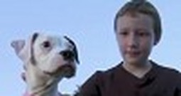 Dog Saves a Boy From a Deadly Bee Attack