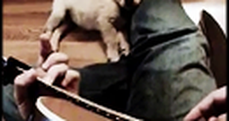 Golden Retriever Puppy Loves it When His Owner Plays Guitar