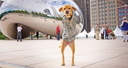 Faith the Miracle Two-Legged Dog Did Something You Won't Believe