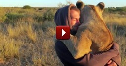 This Loving Lioness Will Change How You Think About Lions