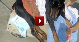 What Happens to Kenny the Paralyzed Dog Will Give You Hope