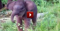 The Tiniest and Sweetest Elephant Learns to Use Her Trunk