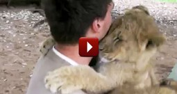 Lion Cubs Hug Trainer on his Last Day - Adorable