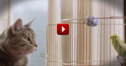 When This Kitty Spied the Bird I Got A Little Nervous. See What Happens at :15 That Lets You Know It