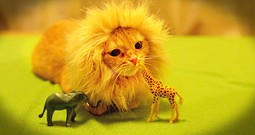 Lion Kitty Adorably 'Attacks' A Giraffe