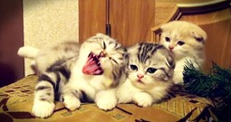 Apparently, These 3 Kittens Are Sleepy, And Now I'm Yawning Too!