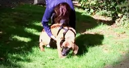 Rescue Dog Touches Grass For The Very First Time And You HAVE To See It