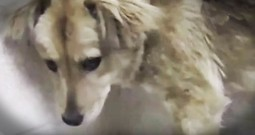 Eye-Opening Truth Behind Puppies As Gifts Will Remind You A Home Should Be Forever