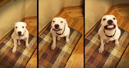 Foster Puppy's Cheesy Grin Will Make Your Day